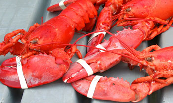 Maine Lobster Festival information